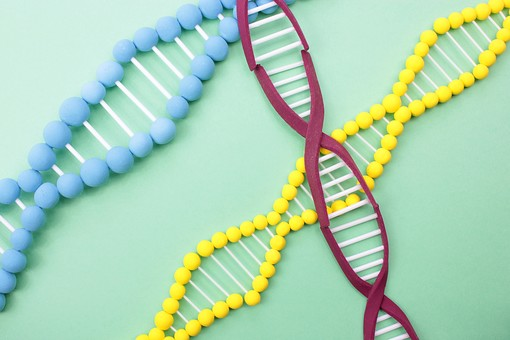 【ダイエット遺伝子キット】遺伝子博士は当たらないし痩せる効果も評判も嘘?気になる実践者の口コミ・評判から結果を調査